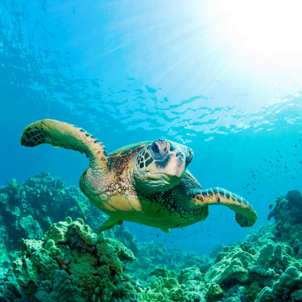Underwater photography holidays dive worldwide enjoy unlimited photographic opportunities of hammerheads whale sharks turtles and manta rays in the galapagos islands publicscrutiny Image collections