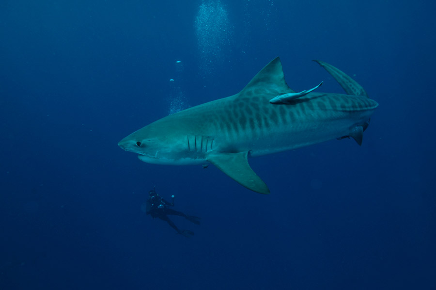 Sharkweek Diving Adventure South Africa Diving Holiday
