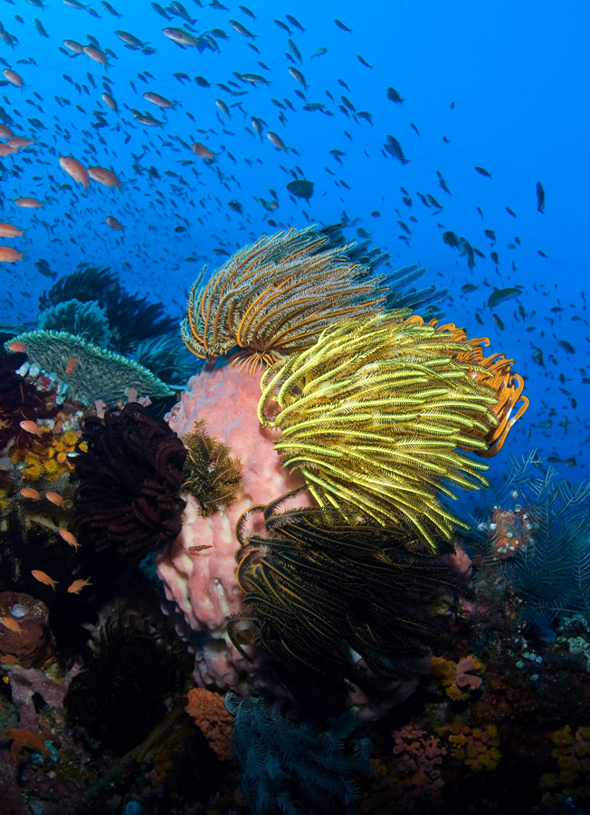 Coral Triangle Snorkelling Adventure Indonesia Diving
