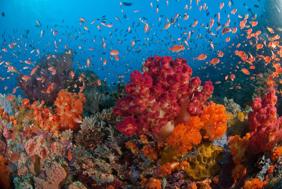 Raja Ampat Liveaboard Indonesia Diving Holiday   Asia group