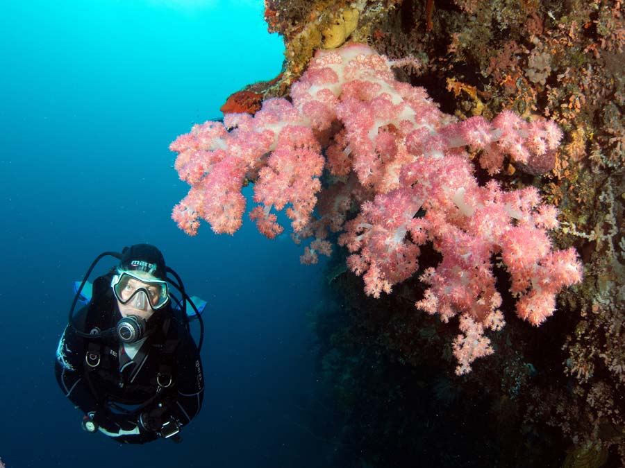 Magic oceans resort holiday accommodation in philippines asia dive worldwide - Magic oceans dive resort ...