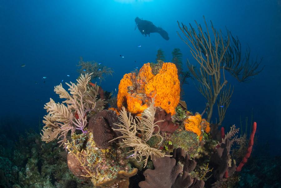 Turks Amp Caicos Explorer Ii Caribbean Dive Holiday