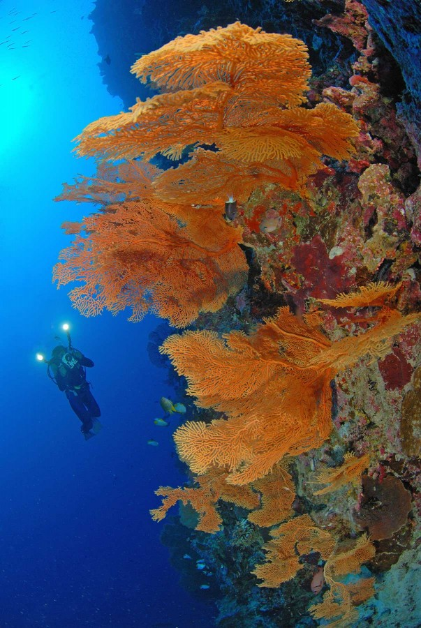 Discover Christmas Island Australia Diving Holiday | South Pacific Trip Idea | Dive Worldwide