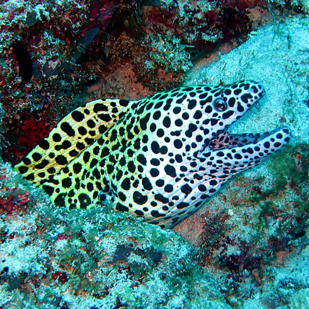 single scuba divers dating