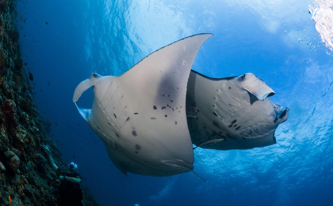 best dive season june august